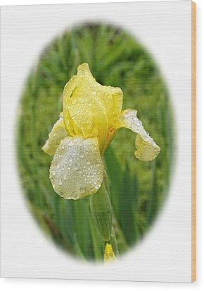 Iris Madi Moonlight Wood Print by Paul Gulliver