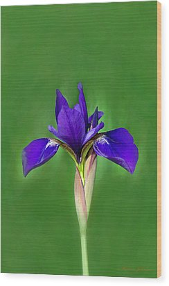 Iris Wood Print by Marion Johnson