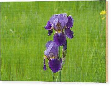 Iris Wood Print by Michele Wright