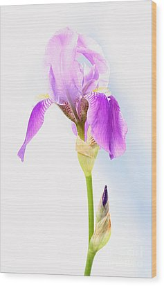 Iris On A Sunny Day Wood Print by Steve Augustin