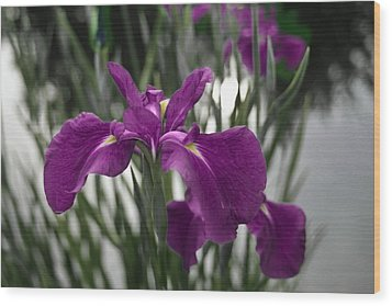 Wood Print featuring the photograph Iris On Pond's Edge by Penny Lisowski