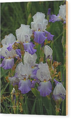 Iris Patch At The Arboretum Wood Print