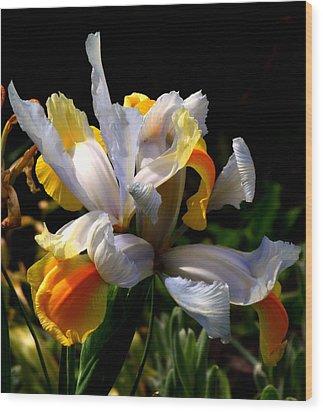 Iris Wood Print by Rona Black