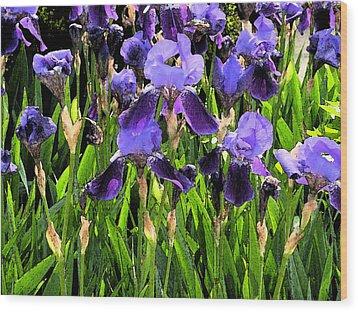 Iris Tectorum Wood Print