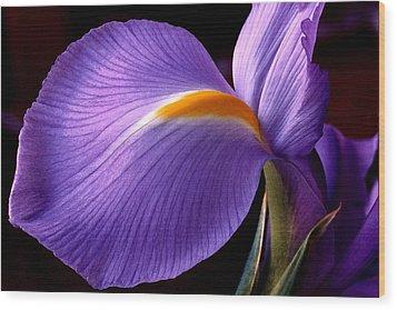 Iris V Wood Print