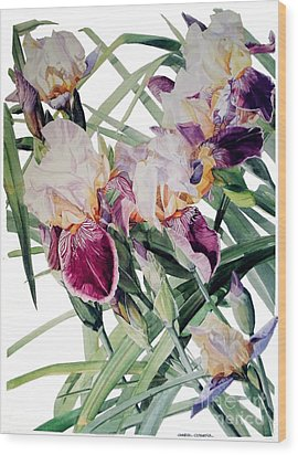 Watercolor Of Tall Bearded Irises I Call Iris Vivaldi Spring Wood Print