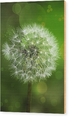 Irish Dandelion Wood Print by Bill Tiepelman