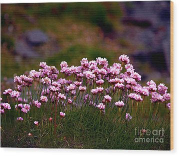Irish Sea Pinks Wood Print