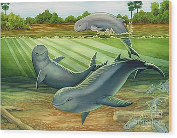 Irrawaddy Or Mekong River Dolphin Wood Print by Tammy Yee
