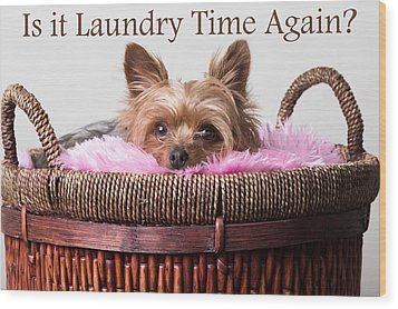 Is It Laundry Time Again? Wood Print by Purple Moon