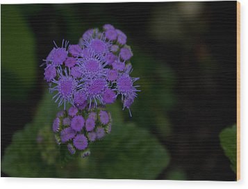 Wood Print featuring the photograph Is That Purple by Greg Graham