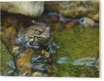 Wood Print featuring the photograph Is There A Prince In There? - Frog On Rocks by Jane Eleanor Nicholas