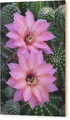 Ishtar Cactus Duo Wood Print by Cindy McDaniel
