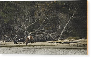Island Pony Wood Print