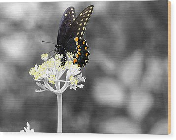 Isolated Swallowtail Butterfly Wood Print by Lorri Crossno