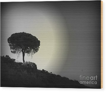 Isolation Tree Wood Print by Clare Bevan