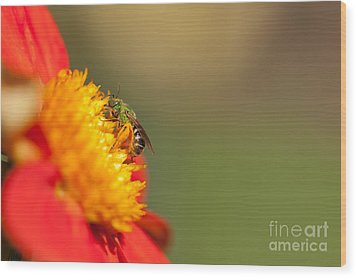 It Is All About The Buzz Wood Print by Beve Brown-Clark Photography
