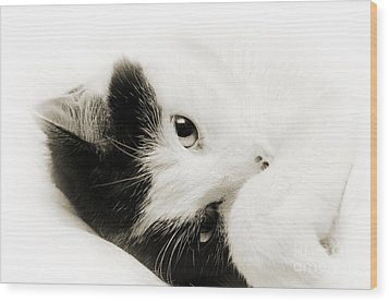 It Is Hard To Be So Cute Wood Print by Andee Design