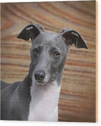 Italian Greyhound Wood Print by Angie Vogel