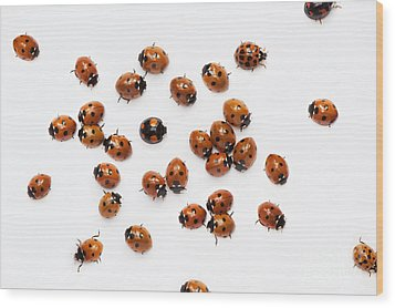 Its A Bug Thing Wood Print by Tim Gainey