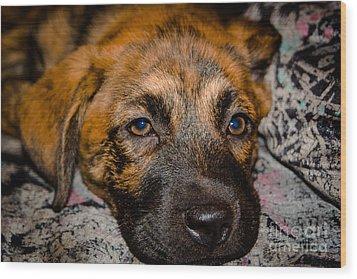 Its A Dogs Life Wood Print by Ronny Sczruba