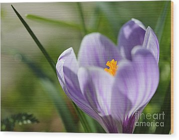 It's Finally Spring Wood Print by LHJB Photography