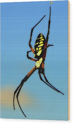 Itsy Bitsy Spider Wood Print by Karen Wiles