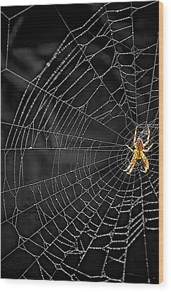 Itsy Bitsy Spider My Ass 3 Wood Print by Steve Harrington
