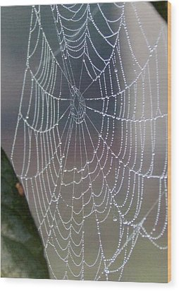 Wood Print featuring the photograph Ittsy Bittsy Spider by John Glass