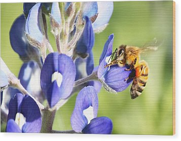 I've Got A Bee In My Bluebonnet Wood Print by Lorri Crossno