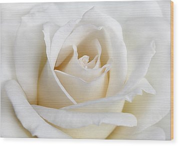 Ivory Rose Flower Wood Print by Jennie Marie Schell