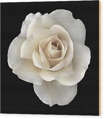 Ivory Rose Flower Portrait Wood Print by Jennie Marie Schell