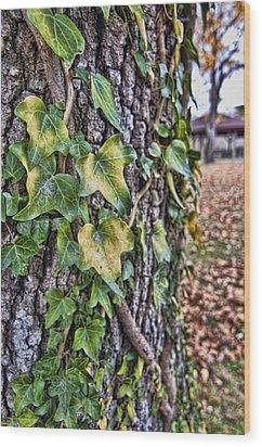 Ivy Wood Print
