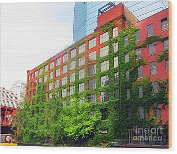 Ivy-covered Building On The Chicago River Wood Print by Matthew Peek