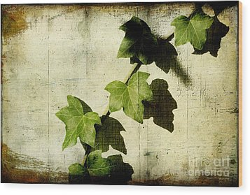 Ivy Wood Print by Ellen Cotton