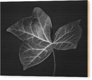 Black And White Flowers Macro Photography Art Work Wood Print