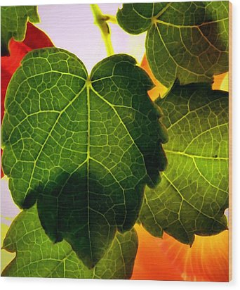Ivy Light Wood Print by Chris Berry