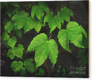 Wood Print featuring the photograph Ivy by Tom Brickhouse