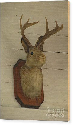 Jack-a-lope Wood Print by Donna Brown