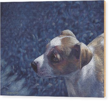 Jack Russell Terrier On Blue Wood Print