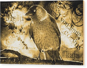 Jackdaw Wood Print by Tommytechno Sweden