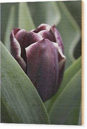 Jackpot Tulip Wood Print