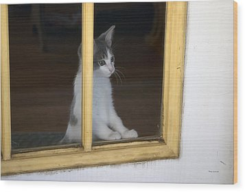 Jackson The Inquisitive Kitty Wood Print by Thomas Woolworth