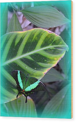 Jade Butterfly With Vignette Wood Print by Carla Parris