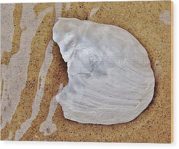 Jagged White Shell Wood Print by Kathi Mirto