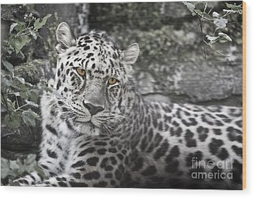 Jaguar Wood Print by Rich Collins