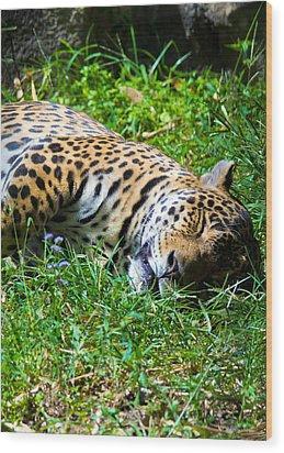 Jaguar's Slumber Wood Print