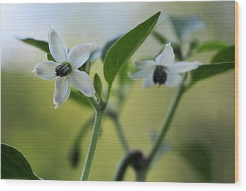 Jalapeno Flowers Wood Print by Kathryn Whitaker