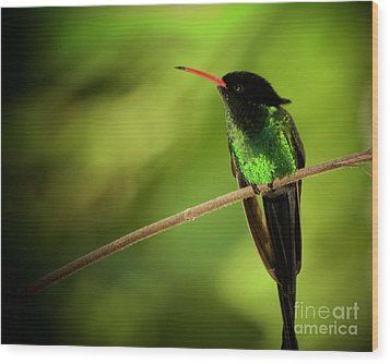 Jamaican Hummingbird 2 Wood Print by Marjorie Imbeau