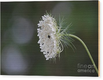 jammer Garden Lace 2 Wood Print by First Star Art